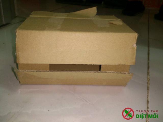 Vật dụng làm hộp nhử mối