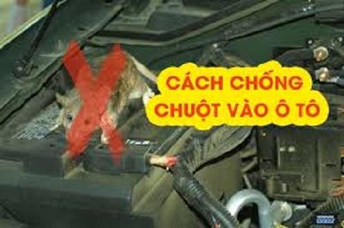 Lắp lưới chống chuột cho xe ô tô