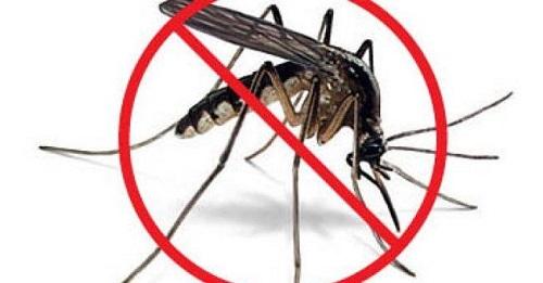 diệt muỗi hiệu quả nhất khi nào