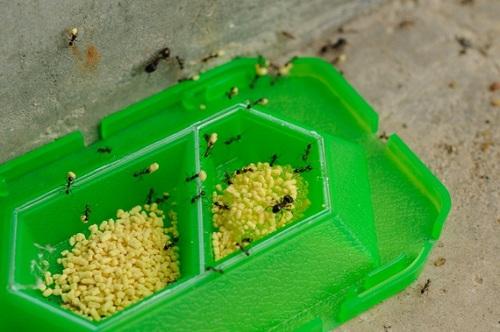 diệt kiến trong tủ quần áo