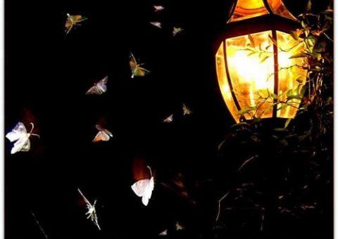 tại sao côn trùng lại bị thút hút bởi ánh sáng đèn