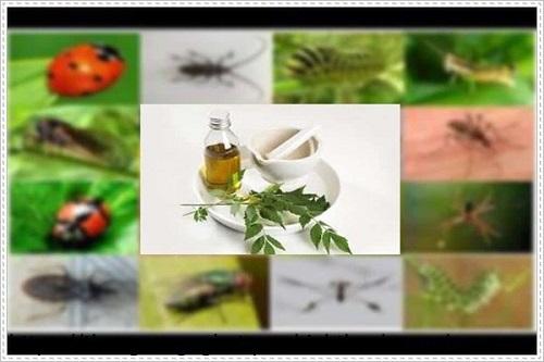 Sử dụng tinh dầu đuổi các loại muỗi và bọ chét rất hiệu quả.